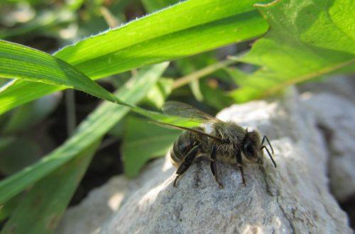 Méhecske relax