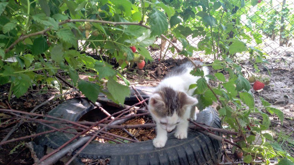 Cica a kertben