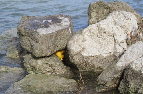 Gumikacsa a vízben